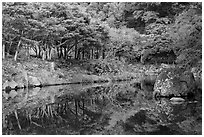 Reflections near Cheongjiyeon Pokpo, Seogwipo. Jeju Island, South Korea ( black and white)