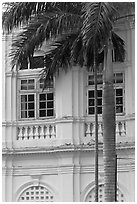 Palm and facade detail, city hall. George Town, Penang, Malaysia ( black and white)