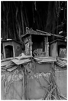 Altars and banyan. George Town, Penang, Malaysia (black and white)