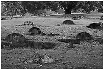 Tombs and trees, Bukit China cemetery. Malacca City, Malaysia (black and white)