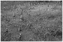 Low-profile muslim gravestones. Malacca City, Malaysia (black and white)