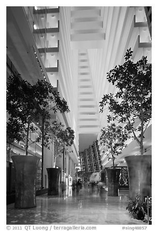 Black And White Picture Photo Casinos Potted Trees