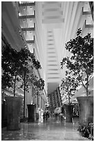 Potted trees inside Marina Bay Sands hotel. Singapore ( black and white)