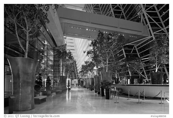 Potted trees, Marina Bay Sands hotel lobby. Singapore (black and white)
