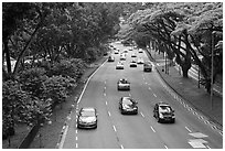 Expressway bordered by trees. Singapore ( black and white)