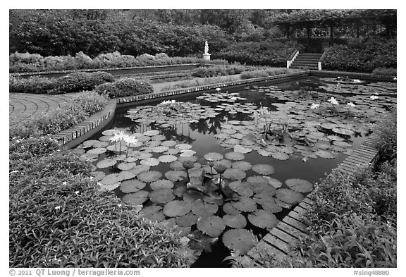 Pond with water lillies, Singapore Botanical Gardens. Singapore (black and white)