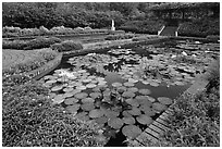 Pond with water lillies, Singapore Botanical Gardens. Singapore ( black and white)