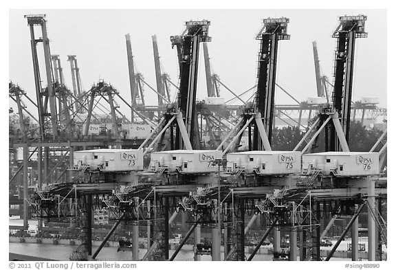 Cranes. Singapore (black and white)