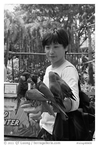 Man holding many parakeets on arm, Sentosa Island. Singapore