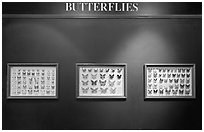 Butterfly exhibit, Sentosa Island. Singapore (black and white)