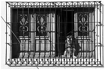 Window with forged metal grid and dog, Tlaquepaque. Jalisco, Mexico ( black and white)