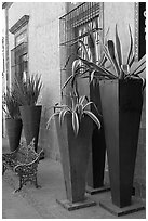 Pots with agaves for sale outside a gallery, Tlaquepaque. Jalisco, Mexico ( black and white)
