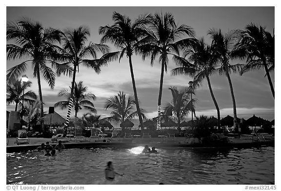 Black And White Picture Photo Palm Tree Fringed Swimming Pool At