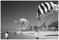 Parasails inflated on beach, Nuevo Vallarta, Nayarit. Jalisco, Mexico (black and white)