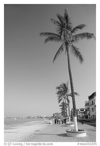 Palm trees on the Malecon, morning, Puerto Vallarta, Jalisco. Jalisco, Mexico (black and white)