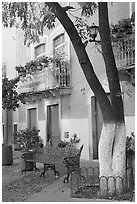 Tree, publich bench, and house on Plazuela San Fernando. Guanajuato, Mexico ( black and white)
