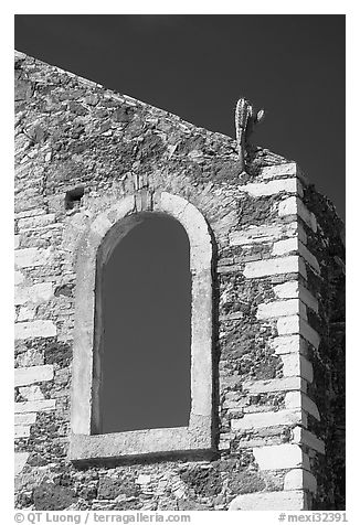 Corner of a ruined house with cactus growing out. Guanajuato, Mexico (black and white)