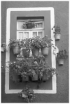 Window decorated with many potted flowers. Guanajuato, Mexico (black and white)