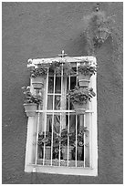 Window decorated with many potted plants. Guanajuato, Mexico (black and white)