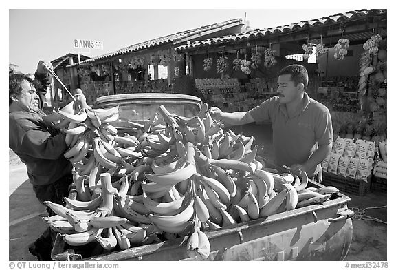 Man unloading bananas from the back of a truck. Mexico (black and white)