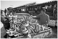 Man unloading bananas from the back of a truck. Mexico ( black and white)