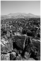 Hardened lava field. Mexico ( black and white)