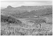 Rural landscape with grasses and agave field. Mexico (black and white)