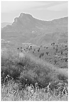 Grasses, agaves, and mountains. Mexico (black and white)