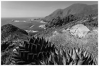 Mountainous Pacific coastline. Baja California, Mexico (black and white)