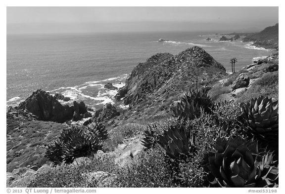 Succulent plants and Pacific coastline. Baja California, Mexico (black and white)