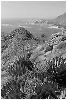 Succulents and rocky coastline. Baja California, Mexico (black and white)