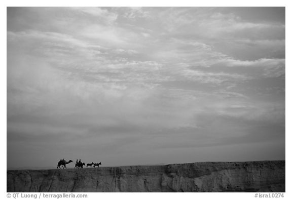 Men riding donkeys leading a camel at sunset, Judean Desert. West Bank, Occupied Territories (Israel) (black and white)
