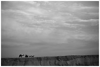 Men riding donkeys leading a camel at sunset, Judean Desert. West Bank, Occupied Territories (Israel) ( black and white)