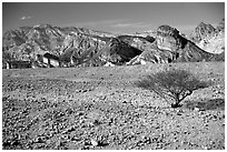 Bush and colorful cliffs. Negev Desert, Israel ( black and white)