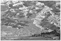 Desert and palm trees. Israel (black and white)
