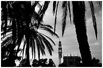 Palm tree and tower, Jaffa, Tel-Aviv. Israel ( black and white)