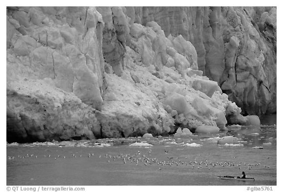 Kayaker bellow  the front of Lamplugh Glacier. Glacier Bay National Park, Alaska