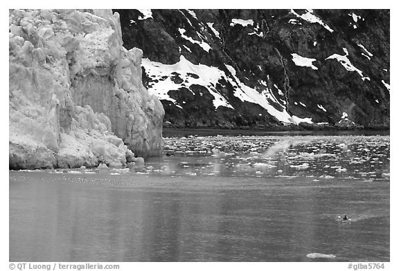 Kayaker paddling away from Lamplugh Glacier. Glacier Bay National Park, Alaska