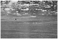 Kayaker paddling amongst icebergs. Glacier Bay National Park, Alaska (black and white)