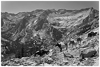 Pack horses on trail above Le Conte Canyon. Kings Canyon National Park, California (black and white)