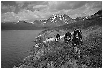 Backpackers travelling cross-country on the shore of Turquoise Lake. Lake Clark National Park, Alaska (black and white)