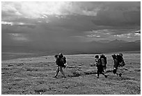 Three backpackers walk on a ridge in the tundra. Lake Clark National Park, Alaska (black and white)