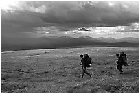 Two backpackers seen from the side walking fast in the tundra. Lake Clark National Park, Alaska (black and white)