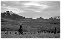 Alaska Range at dusk from near Savage River. Denali National Park ( black and white)