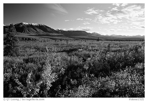 Alaska Range and tundra from near Savage River. Denali National Park (black and white)