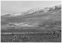 Dusting of snow and tundra fall colors  near Savage River. Denali National Park, Alaska, USA. (black and white)