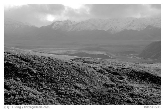 Tundra and Alaska Range near Sable pass. Denali National Park (black and white)