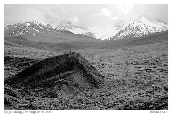 Hills and mountains near Sable Pass. Denali National Park (black and white)