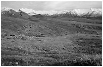 Tundra and Alaska Range near Eielson. Denali National Park ( black and white)
