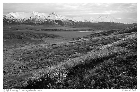 Tundra, Alaska Range, and Denali near Eielson. Denali National Park (black and white)